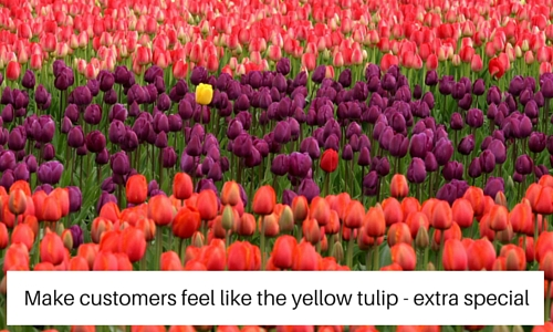 stand out yellow tulip