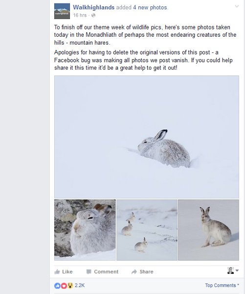 Snowy rabbit Facebook post Highlands Scotland