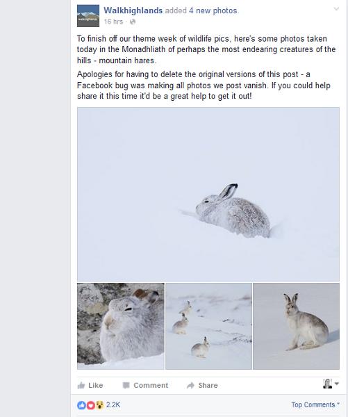 Snowy rabbit Facebook post Highlands Scotland