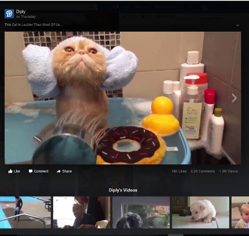Cat video on Facebook